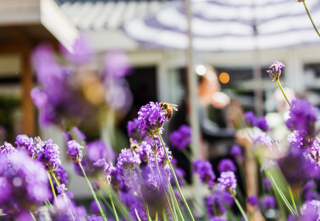 AYA Farmer Blogbeitrag Money Superpower - Lavender not only smells wonderful to us, it also attracts bees.