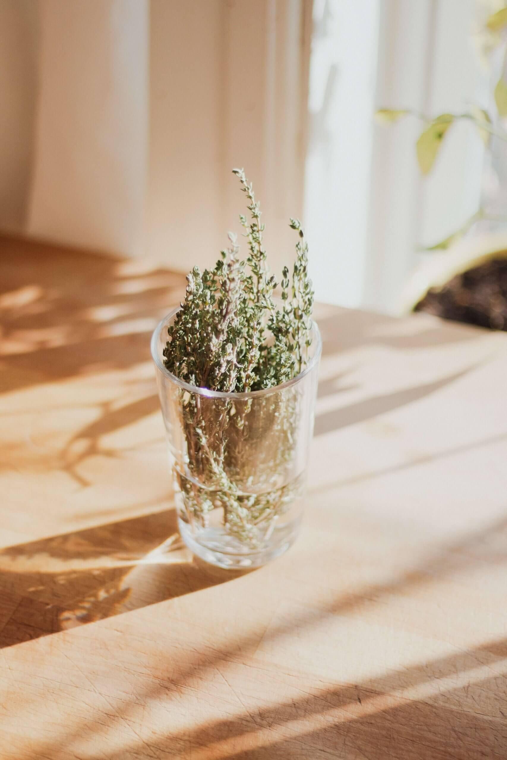Bild von Thymian im Glas